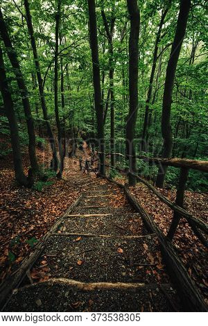 Landscape Photo Of Wooden Stairs In Forest On Rainy Day. Beautiful Dark And Moody Scenic Pov View On
