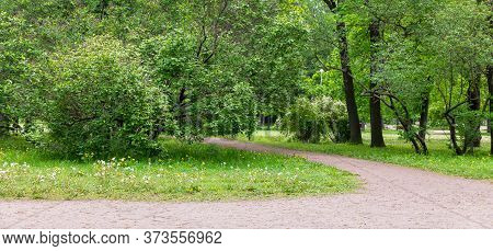 Empty Urban Green Park With Lilac Tall Trees And Dandelions. A Place Of Rest From The Bustle Of The