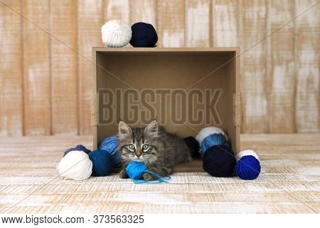 Cute Kitten in a Box of Blue and White Yarn