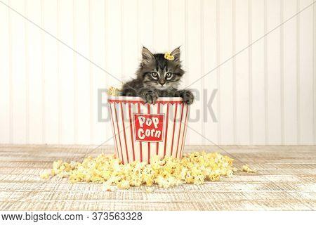 Curious Kitten in a Popcorn Bucket
