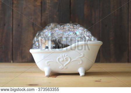 Adorable Kitten in a Bathtub With Bubbles