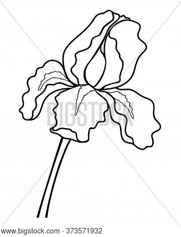 Iris Flower - Linear Vector Illustration For Coloring. Iris - A Garden Plant - An Element For A Colo