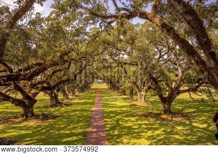 Saint James Parish, Louisiana - October 6, 2019 Oak Trees Oak Alley Plantation Vacherie Saint James