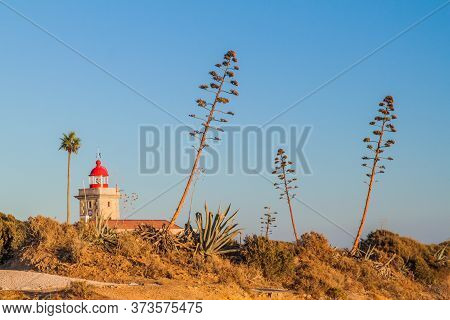 Lighthouse And Agave Plants At Ponta Da Piedade Near Lagos, Portugal