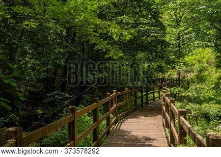 Wooden Boardwalk Through Lush Verdant Trees In Mountain Recreational Forest.