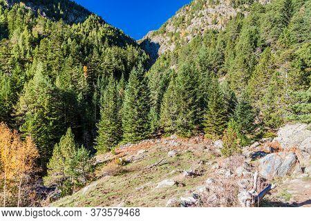 Forest In Parc Natural Comunal De Les Valls Del Comapedrosa National Park In Andorra