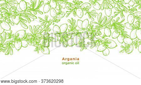 Argan Tree. Vector Sketch Of Green Forest, Branch, Nut, Seed, Foliage. Hand Drawn Illustration On Wh