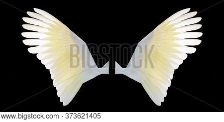 White Angel Wings Isolated On Black Background. White And Yelow Bird Wings