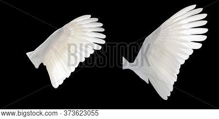 White Angel Wings Isolated On Black Background. White Bird Wings