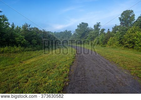 Morning Mist And Yellow Wildflowers On This Path In Freneau Woods Park In Monmouth County Nre Jersey