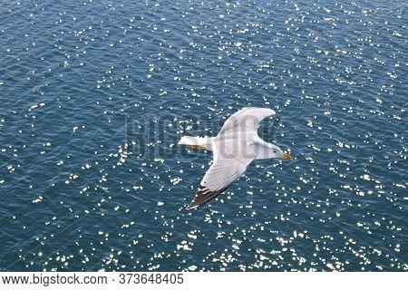 Seagull Sea Summer Blue White Shiny Sunshine Peace Greece Thassos Island Serenity Calm Peaceful