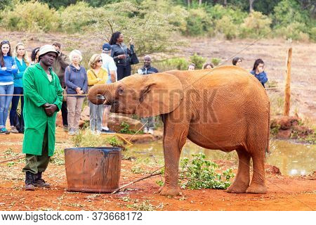 Nairobi, Kenya - August, 2019: Small Baby Elephant Drinking Water In An Elephant Orphanage In Nairob