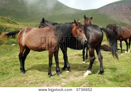 Group Of Horses Free On Mountain Cloudy Day