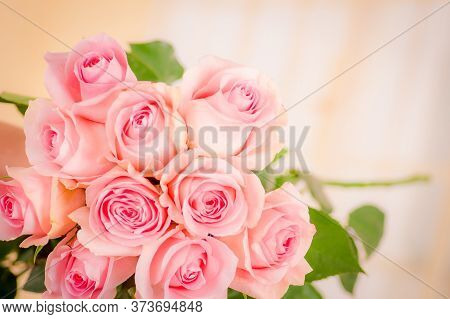 Close Up Macro Of Luciano Roses Variety, Studio Shot.