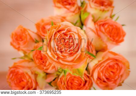 Close Up Macro Photo Of Country Home Roses Variety, Studio Shot. Garden Rose