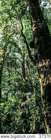 Panorama Beautiful Landscape Of  Rainforest In Doi Inthanon National Park , Thailand .