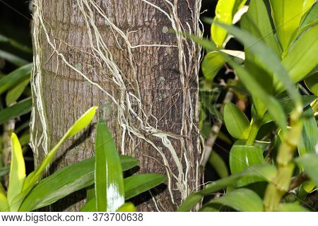 Palm Tree Trunk With Orchid Leaves And Roots, Pretoria, South Africa
