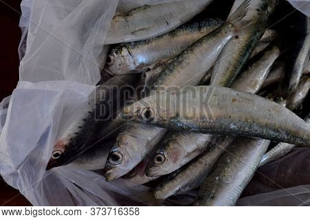 Sardine Is A Fish That Is Easily Found In Fishmongers, It Is Usually Fished In The Mediterranean Sea