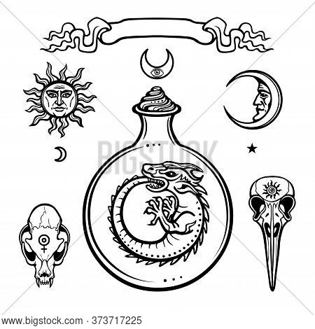 Set Of Alchemical Symbols. Origin Of Life. Mystical Snakes In A  Test Tube. Religion, Mysticism, Occ