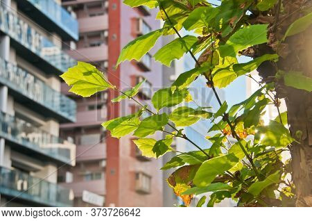 Calm Scene Of Light Morning Sun With Fresh Green Lush Tree Leaves In A Busy City With High-rise Resi