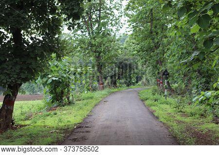 Forest On A Rainy Day. Rocky Road In Forest Nature. Green Forest Road. Nature. Road. Natural Environ