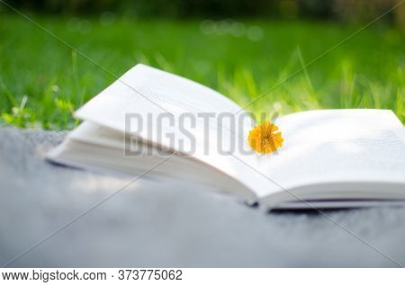 Open Book And Flowers For A Good Rest