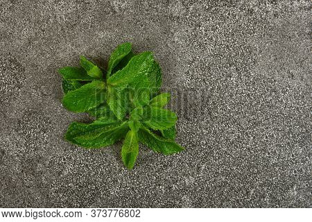 Close Up Heap Of Fresh Green Mint Leaves On Grunge Gray Stone Table Surface, Elevated Top View, Dire