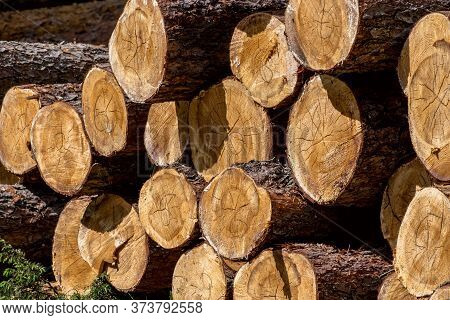 Woodpile Of Cut Lumber For Forestry Industry.