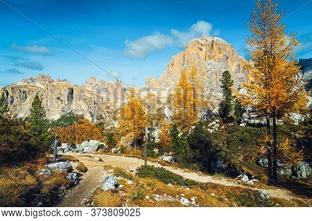 Touristic Hiking Trail In The Colorful Autumn Forest. Yellow Redwoods And Famous Tofana Di Roses Mou