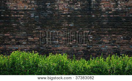 Green Bushes And Brick Wall