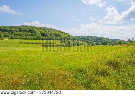 Grassy Fields And Trees With Lush Green Foliage In Green Rolling Hills Below A Blue Sky In Sunlight