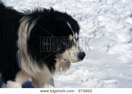 poster of big dog