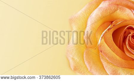 Close Up Of Half Of Fresh Bright Orange Rose. Horizontal Macro Banner With Copy Space For Text And C