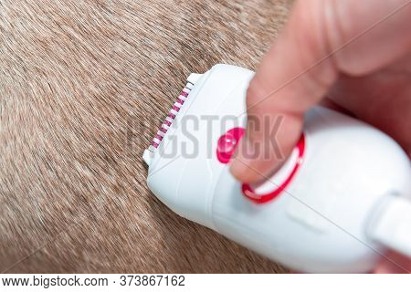 Electric Epilator Device On Dog Wool. Attempt To Shave A Very Hairy Place. Remove Hair