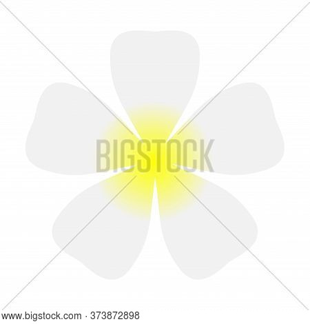 Plumeria Flowers White Simple Isolated On White, Illustration Plumeria Spa Flower Beautiful, Clip Ar