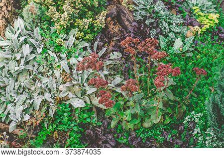 Flowers In Fall Garden. Various Flowers Blossom In Autumn Garden