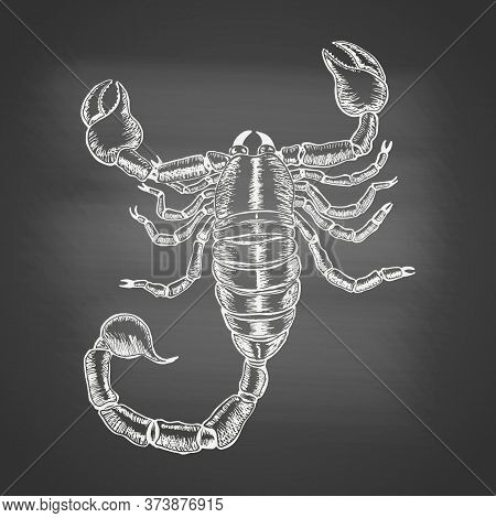 Scorpion - Chalk Drawing On The Blackboard. Hand Drawn Sketch In Vintage Engraving Style. Vector Ill