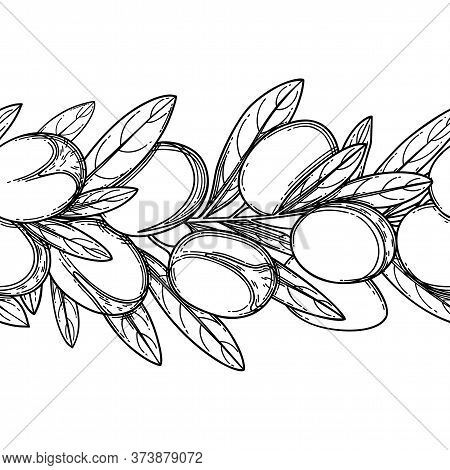 Graphic Argan Branches, Vector Repeated Seamless Border