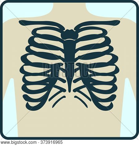 Thoracic Cage Bone, Chest X-ray Concept Icon, Roentgen Human Body Image Isolated On White, Flat Vect