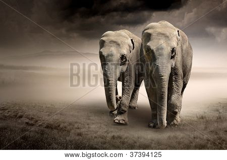 Pair of elephants in motion