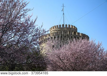 White Tower Of Thessaloniki In Greece, Cherry Blossom