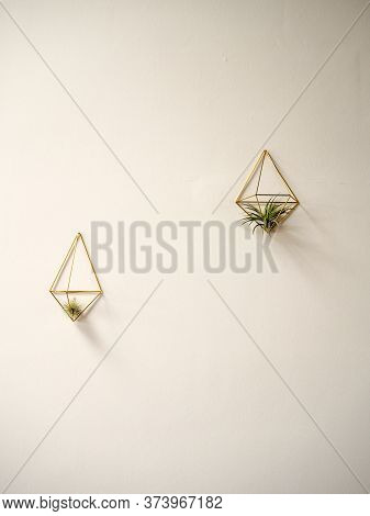 Two Tillandsias Or Airplants ( Bromeliaceae) In A Golden Hanger On A White Wall Background
