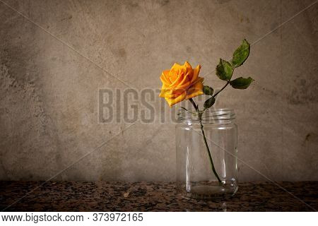 Withered Orange Rose In A Jar On A Plain Old Wall Background. Aging, Decay And Nostalgia Concept. Sp