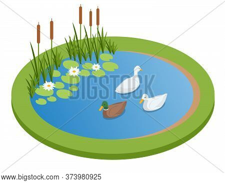 Isometric Lake With Ducks Isolated On Wrhite. City Park Recreational Area. Ducks Swimming On The Lak
