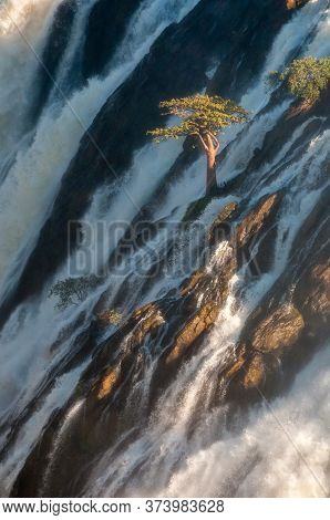 A Baobab Tree In The Middle Of He Ruacana Waterfall In The Kunene River