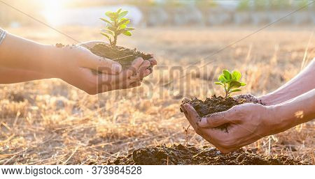 Hand Of People Helping Plant The Seedlings Tree To Preserve Natural Environment While Working Save W