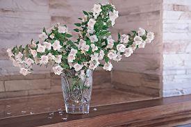 Flowers Of An English Dogwood Or Sweet Mock-orange In A Vase. Philadelphus Coronaries Flowers In A C