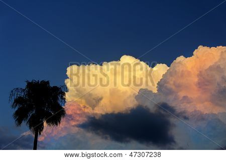 Palm Tree And Tropical Storm Clouds