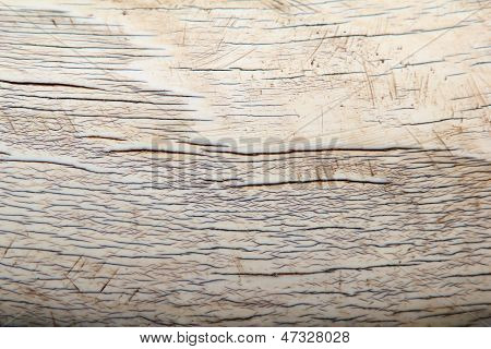 Ivory - African Elephant - Nature Background of precious material