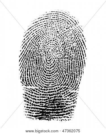 Real fingerprint in white background Super macro